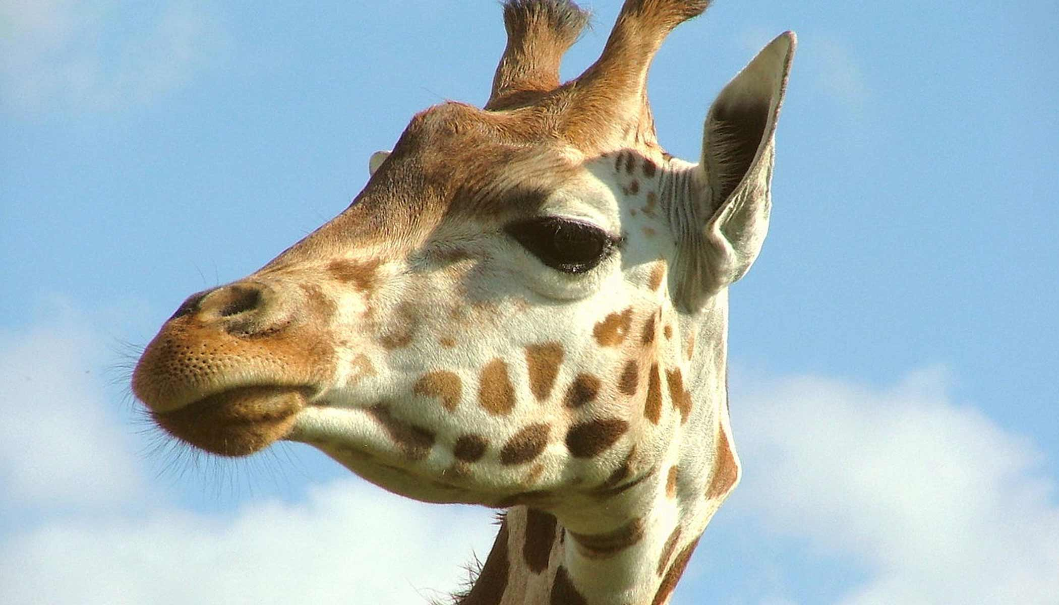 image: Whipsnade Zoo